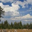 Międzynarodowy dzień lasów – dlaczego warto o nim pamiętać